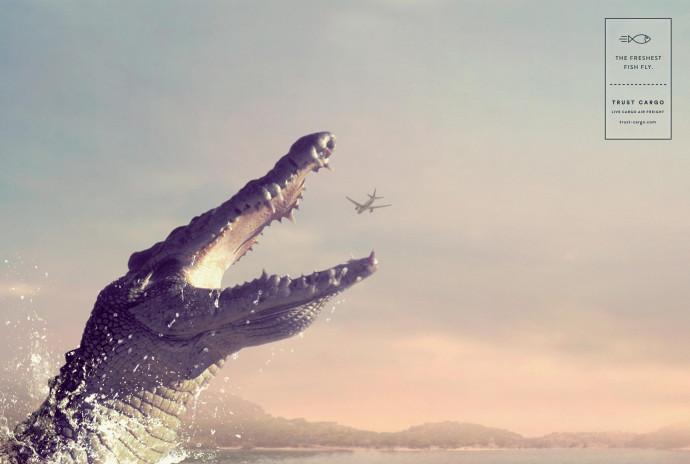 Trust Cargo International: Crocodile