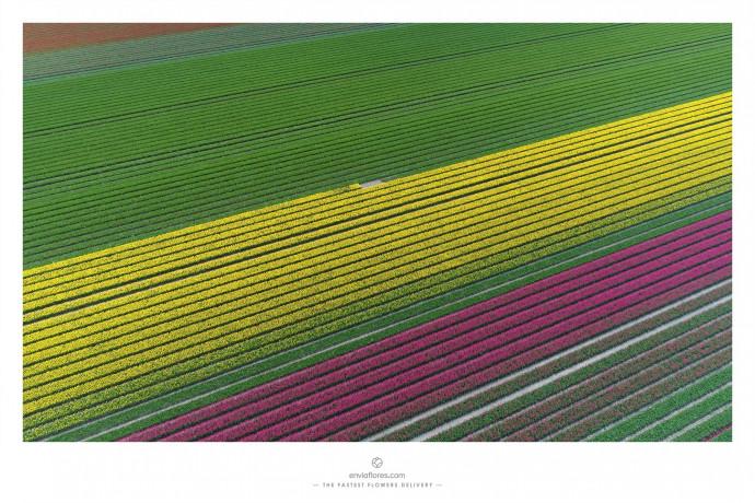 EnviaFlores.com: The Fastest Flowers Delivery, 4