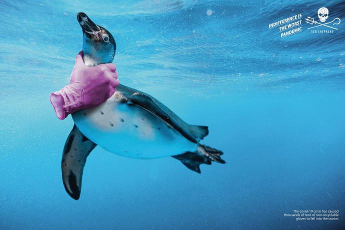 Sea Shepherd: Gloves, 2